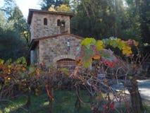 Wijngaard in Californië royalty-vrije stock foto's
