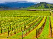 Wijngaard in Californië Royalty-vrije Stock Afbeelding