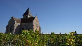Wijngaard in Chablis, Bourgogne, Frankrijk stock video