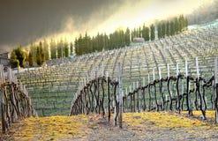 Wijngaard - Chianti, Italië Stock Afbeelding