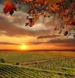 Wijngaard in Chianti, Toscanië stock foto's