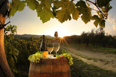 Wijngaard in Chianti, Toscanië Royalty-vrije Stock Foto's