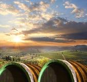 Wijngaard in Chianti, Toscanië Stock Afbeeldingen