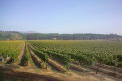 Wijngaard in Chili 1 Stock Afbeeldingen