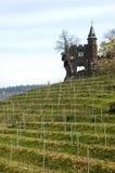 Wijngaard Cochem Royalty-vrije Stock Afbeeldingen