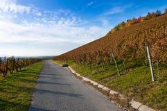 Wijngaard in daling Stock Foto's