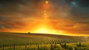 De Kleuren van de wijngaard Stock Fotografie