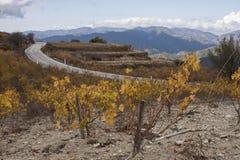 Wijngaard in de bergen Royalty-vrije Stock Foto's