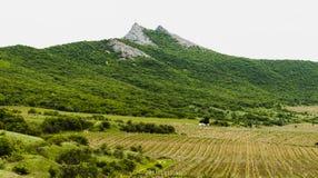 Wijngaard in de bergen met een huis Royalty-vrije Stock Fotografie