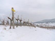 Wijngaard in de de wintertijd Stock Afbeeldingen