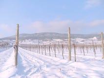 Wijngaard in de de wintertijd Stock Foto