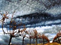 Wijngaard in de herfst Stock Fotografie