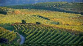 Wijngaard in de herfst no.1 Royalty-vrije Stock Foto