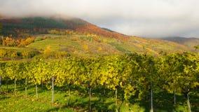 Wijngaard in de herfst no.3 Royalty-vrije Stock Foto