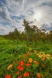 Wijngaard in de herfstzon Royalty-vrije Stock Afbeelding