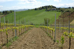 Wijngaard in de heuvels Royalty-vrije Stock Afbeelding