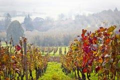 Wijngaard in de mening van de de herfstmist Royalty-vrije Stock Afbeelding