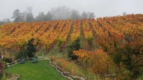 Wijngaard in de mist Stock Foto