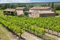 Wijngaard in de Provence stock afbeelding