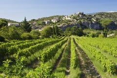 Wijngaard de Provence Royalty-vrije Stock Fotografie