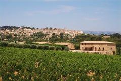Wijngaard in de Provence met dorp op rug Royalty-vrije Stock Foto's