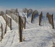 Wijngaard in de sneeuw Stock Foto