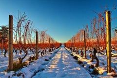 Wijngaard in de sneeuw royalty-vrije stock afbeelding