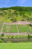 Wijngaard in de vallei van Moezel Stock Afbeeldingen