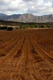 Wijngaard in de wijn regio van Baja Stock Fotografie