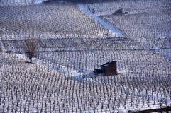 Wijngaard in de winter Stock Foto's