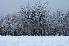 Wijngaard in de winter wordt bevroren die royalty-vrije stock afbeelding