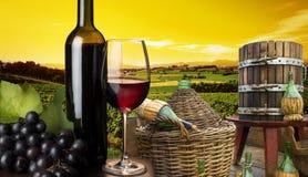 Wijngaard in de zonsondergang Royalty-vrije Stock Fotografie