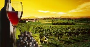 Wijngaard in de zonsondergang Royalty-vrije Stock Afbeeldingen