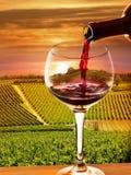 Wijngaard in de zonsondergang Stock Afbeelding