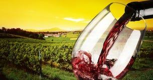 Wijngaard in de zonsondergang Royalty-vrije Stock Foto