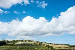 Wijngaard dichtbij Punta Del Este, een deel wordt gevestigd van de Wijnweg van Uruguay dat Royalty-vrije Stock Fotografie