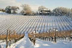 Wijngaard die door sneeuw wordt behandeld Royalty-vrije Stock Foto