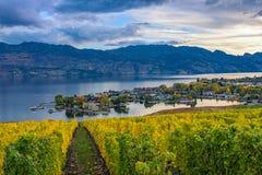 Wijngaard die Okanagan-Meer Kelowna BC Canada overzien Stock Foto's