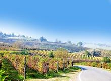 Wijngaard, druivenoogst in Italië, Piemonte Stock Foto's