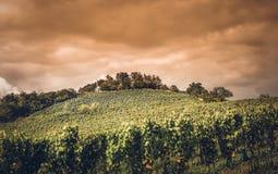 Wijngaard in Duitsland Royalty-vrije Stock Foto's