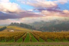 Wijngaard in Dundee Oregon royalty-vrije stock afbeeldingen