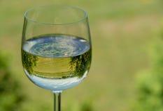 Wijngaard in een Glas Stock Afbeeldingen