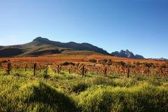 Wijngaard en bergen Stock Foto's