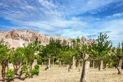 Wijngaard en berglandschap, Cappadocia, Turkije Stock Fotografie