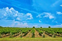 Wijngaard en blauwe hemel met wolken stock foto