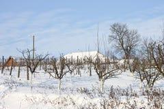Wijngaard en boomgaard in de sneeuw Stock Foto's