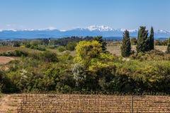 Wijngaard en de Pyreneeën Royalty-vrije Stock Foto's