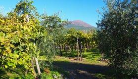 Wijngaard en de Vesuvius Stock Foto's