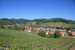 Wijngaard en dorp in de Elzas Stock Foto