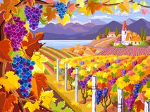 Wijngaard en druivenbossen Autumn Landscape Royalty-vrije Stock Foto's